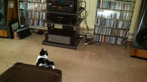 My Tuxedo cat is an audiophile